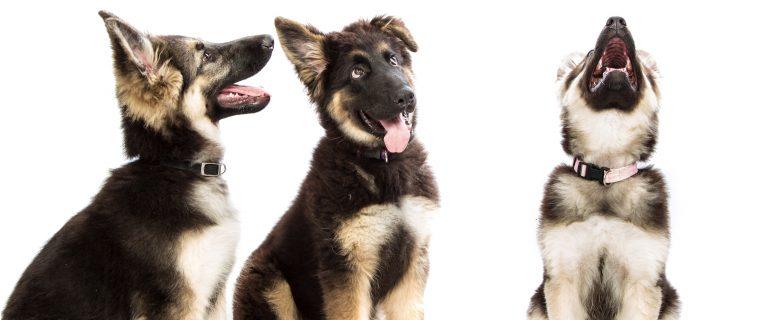 confident puppies