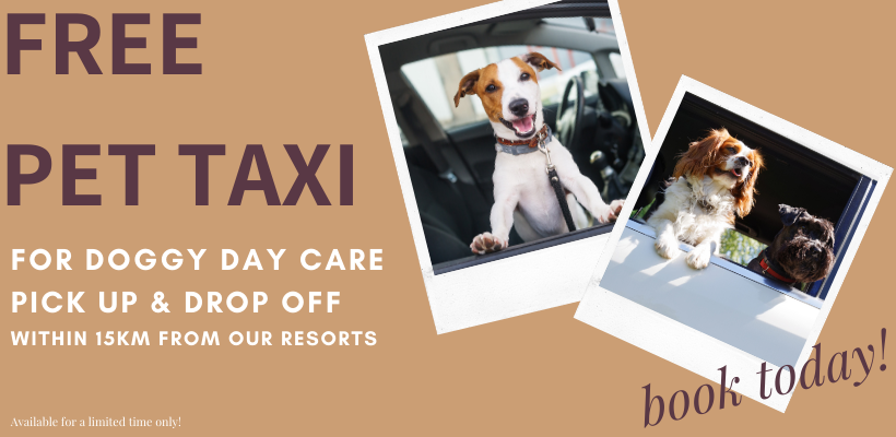 Free Doggy Day Care Pet Taxi