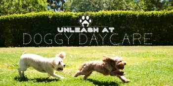 doggy daycare at pet resorts australia
