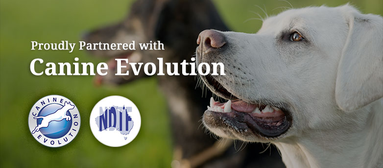dog-training-canine-evolution-partner